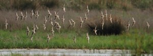 Las fascinantes rutas migratorias de las aves - El Delta a vista de pájaro