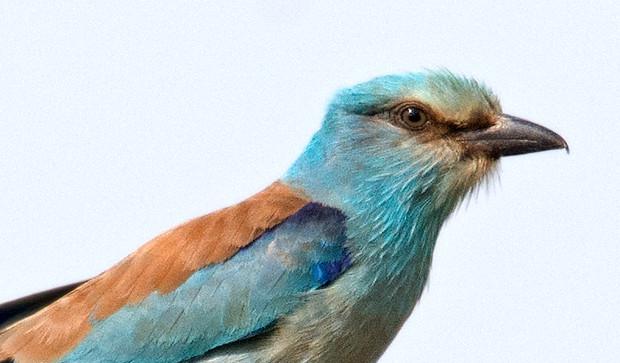 Reportaje de la salida ornitológica a las estepas de Lleida 26 de mayo 2018
