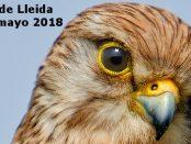 Salida a las estepas de Lleida – Grupo Local SEO Barcelona – 12 de mayo de 2018