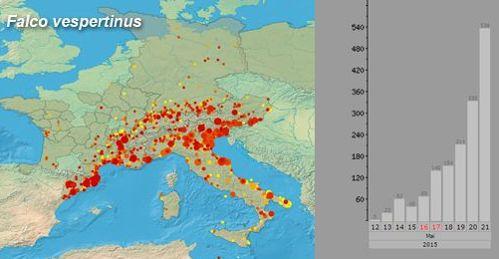Gráfico ICO citas de falco vespertinus 12 al 21 de mayo 2015
