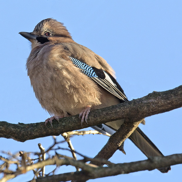 Salida ornitológica a Olot 12 de enero 2019 – Grupo Local SEO Barcelona