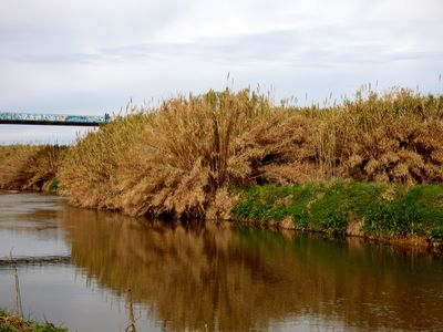 A vueltas por el río (Llobregat, desde luego) - ribera del Llobregat