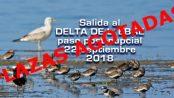 Salida al delta de L'Ebre: paso posnupcial 22 de septiembre 2018 - Grupo Local SEO Barcelona