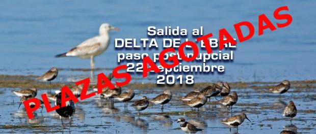 Salida al delta de L'Ebre: paso posnupcial 22 de septiembre 2018
