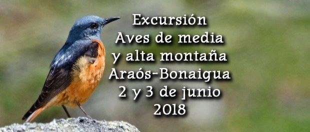 Salida ornitológica Araós – Bonaigua 2 y 3 de junio 2018