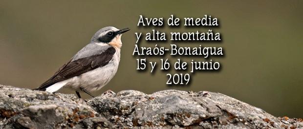 Salida ornitológica Araós-Bonaigua 15 y 16 de junio 2019