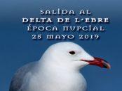 Excursión ornitológica al delta del Ebro – 25 de mayo 2019 – Grupo Local SEO Barcelona