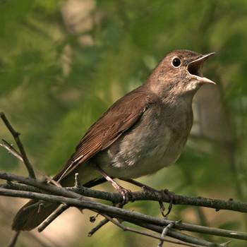 Viaje de boda, reflexiones en torno a la migración primaveral de las aves