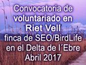Voluntariado ambiental en el Delta del Ebro - SEO/Birdlife