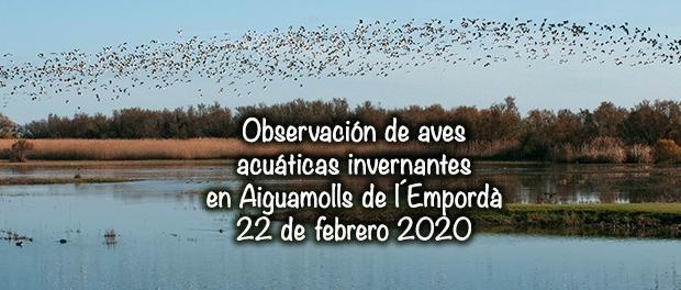 Aiguamolls de l'Empordà 22/02/2020