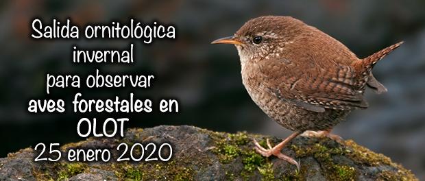 Salida ornitológica a Olot 25 de enero 2020
