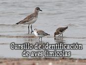 Curso identificación de limícolas- septiembre 2018 - Grupo Local SEO Barcelona