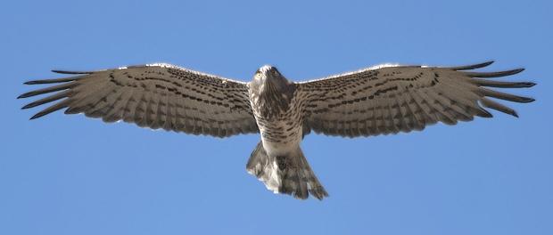 Salida ornitológica a las estepas de Lleida 28 de mayo 2016 – Grupo Local SEO Barcelona