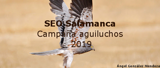 Campaña aguiluchos 2019 - SEO Salamanca