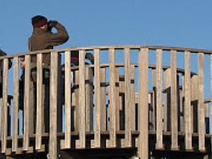 Salida a los Espais Naturals del Delta del Llobregat - noviembre 2010
