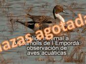Salida ornitológica a Aiguamolls de l'Empordà – 2 de febrero 2019