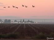 Salida a la Reserva Ornitológica Finca San Miguel - noviembre 2015 - Grupo Local SEO Barcelona - grullas
