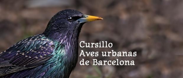 Descubre las aves de Barcelona: cursillo sobre aves urbanas marzo 2019
