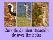 Curso identificación de limícolas- marzo 2017 - Grupo Local SEO Barcelona