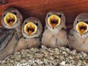 Salida ornitológica Araós - Bonaigua 11 y 12 de junio 2016 – Grupo Local SEO Barcelona