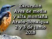 Salida ornitológica Araós - Bonaigua 2 y 3 de junio 2018