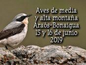 Salida ornitológica Araós - Bonaigua 15 y 16 de junio 2019