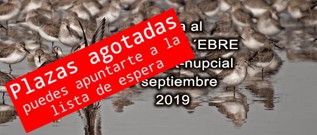 Salida ornitológica delta del Ebro 7 de septiembre 2019