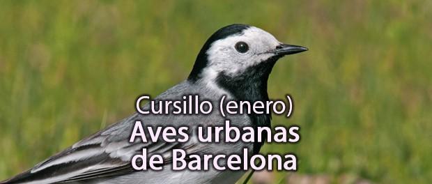 Curso de Aves Urbanas en Barcelona enero 2020